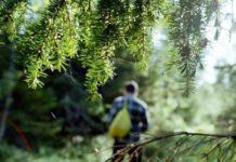 kak dobyt edu v lesu