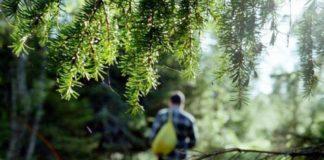 Как добыть еду в лесу