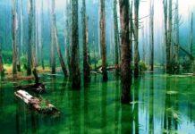 kak dobyt vodu v lesu