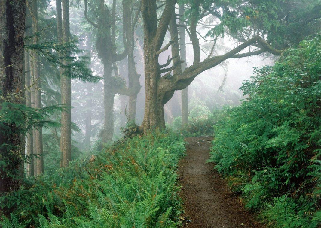 Как сделать укрытие в лесу