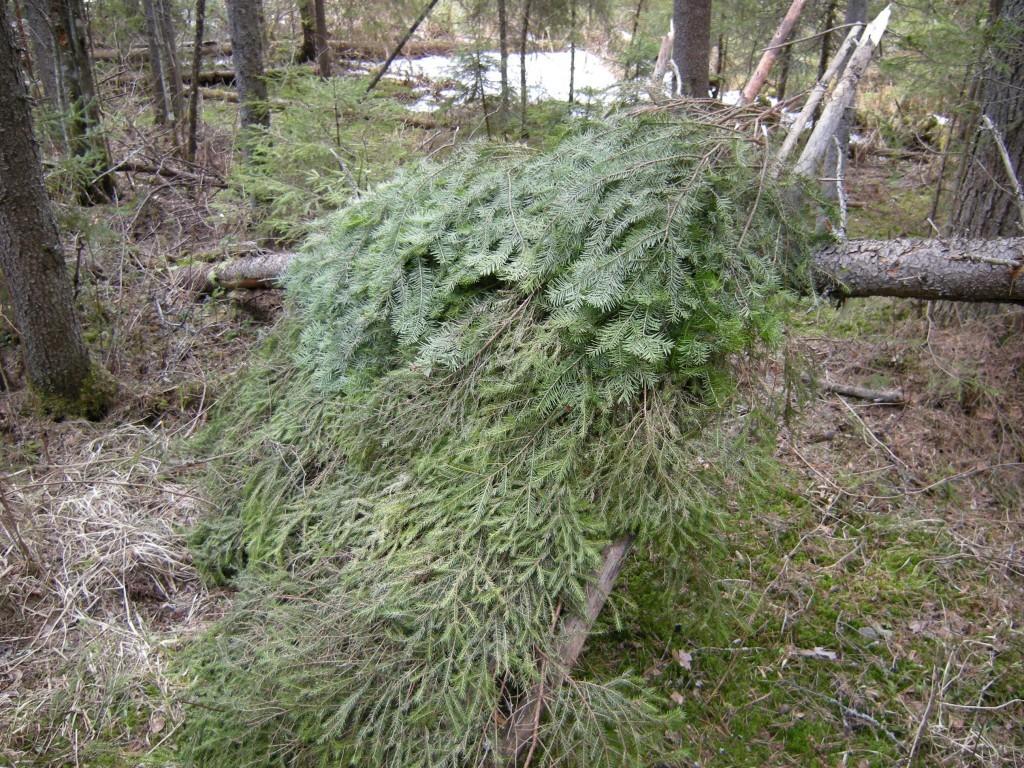 Постройка укрытия в лесу