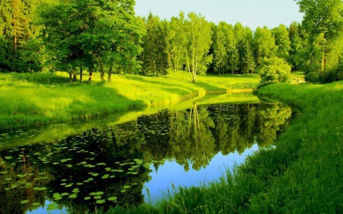 Красочный лес