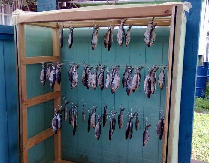sushilka dlya ryby