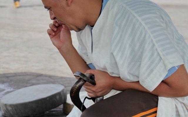 оказание первой помощи при укусе ядовитой змеи