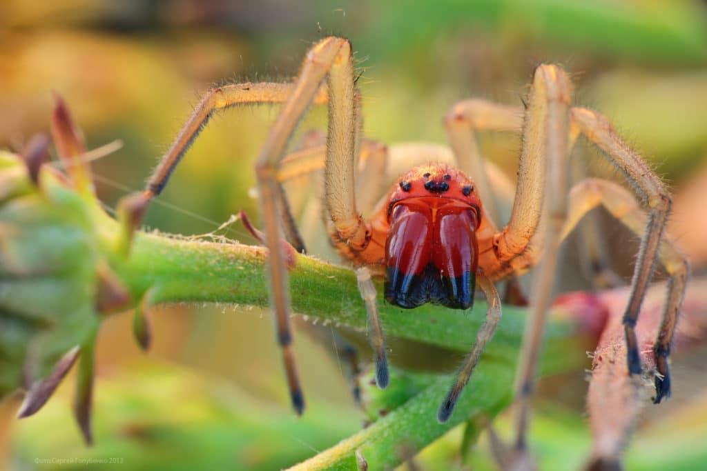 Ядовитые пауки белгородской области
