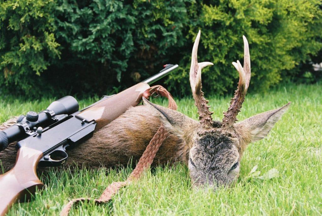 Отстрел животных на территории заповедника является браконьерством