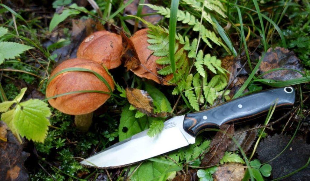 Ножи для грибов