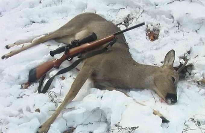 Незаконная охота в заповеднике