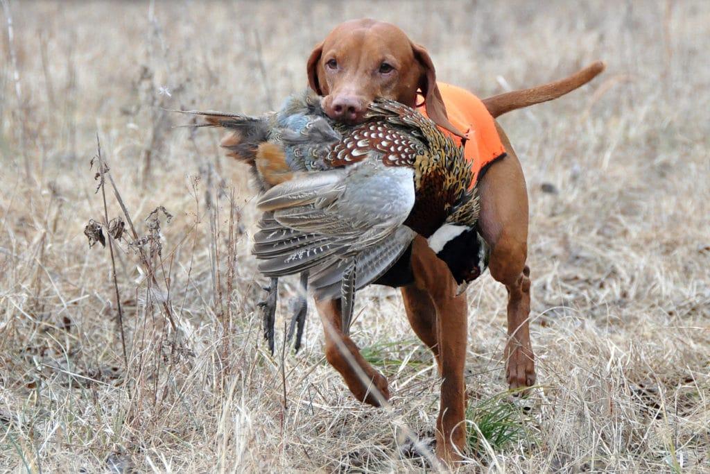 Собаки для охоты