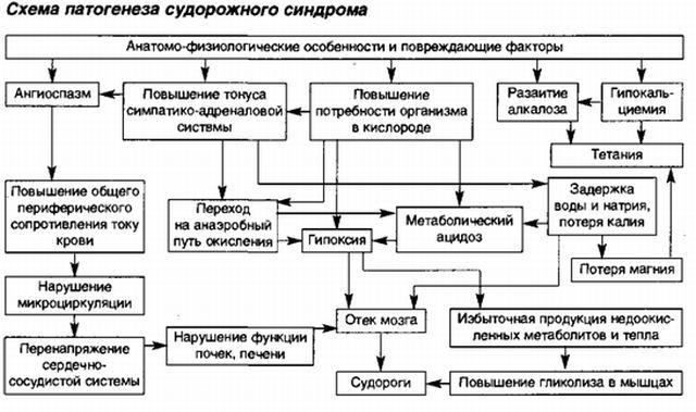 Патогенез судорожного синдрома