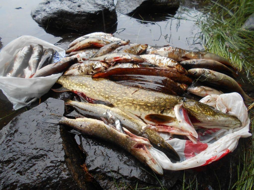 Для приготовления вкусной ухи можно использовать сразу несколько видов рыб