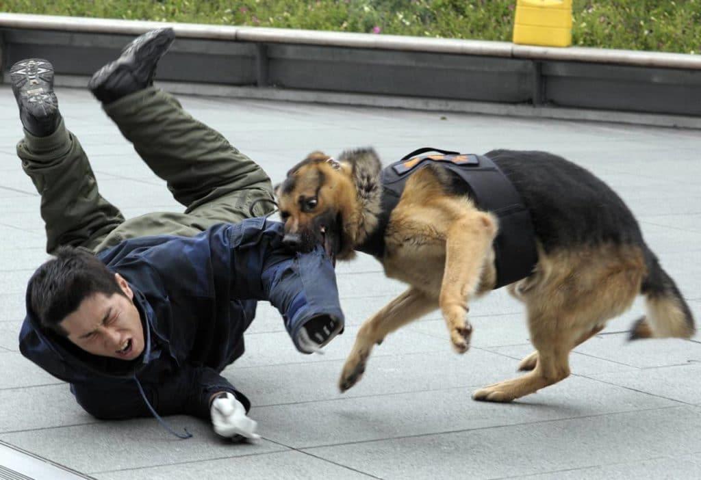 злобная собака