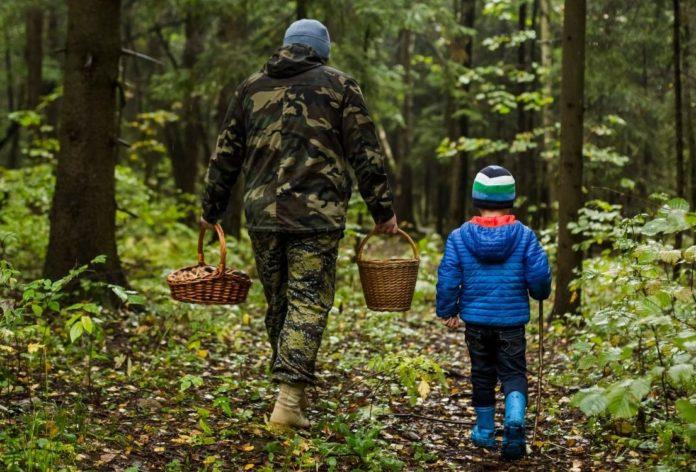 odezhda dlya pohoda v les