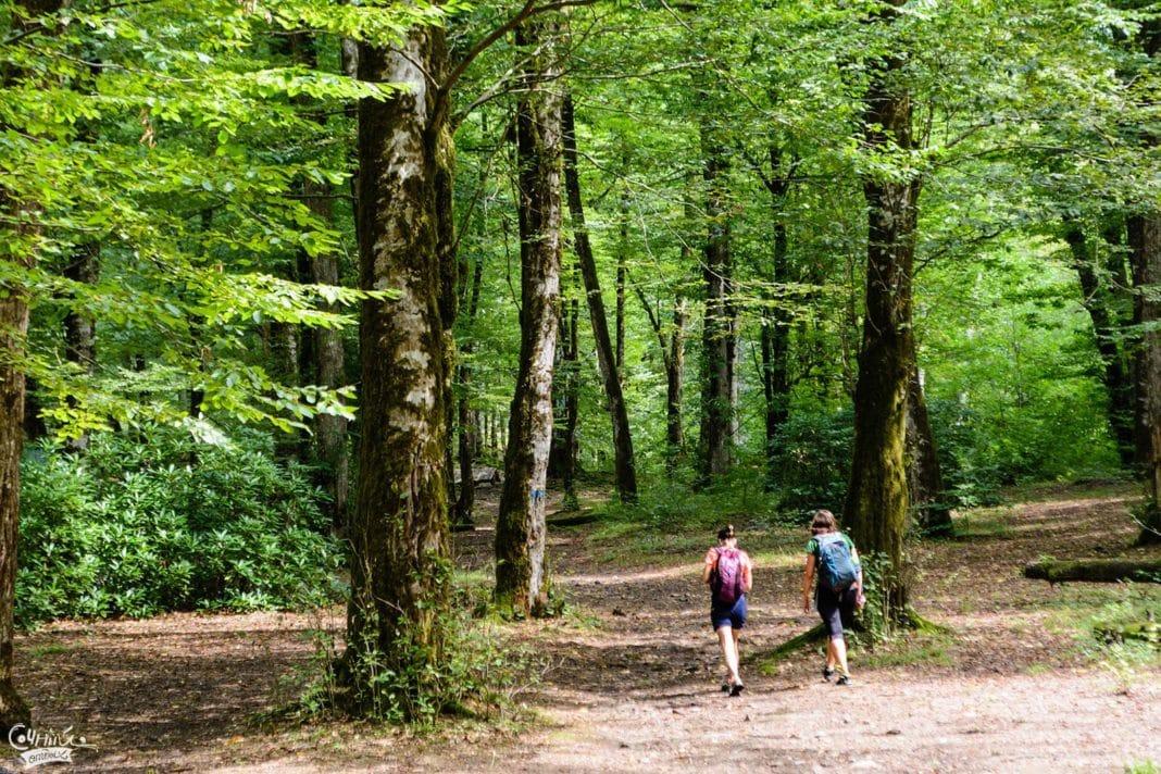 Одежда для похода в лес