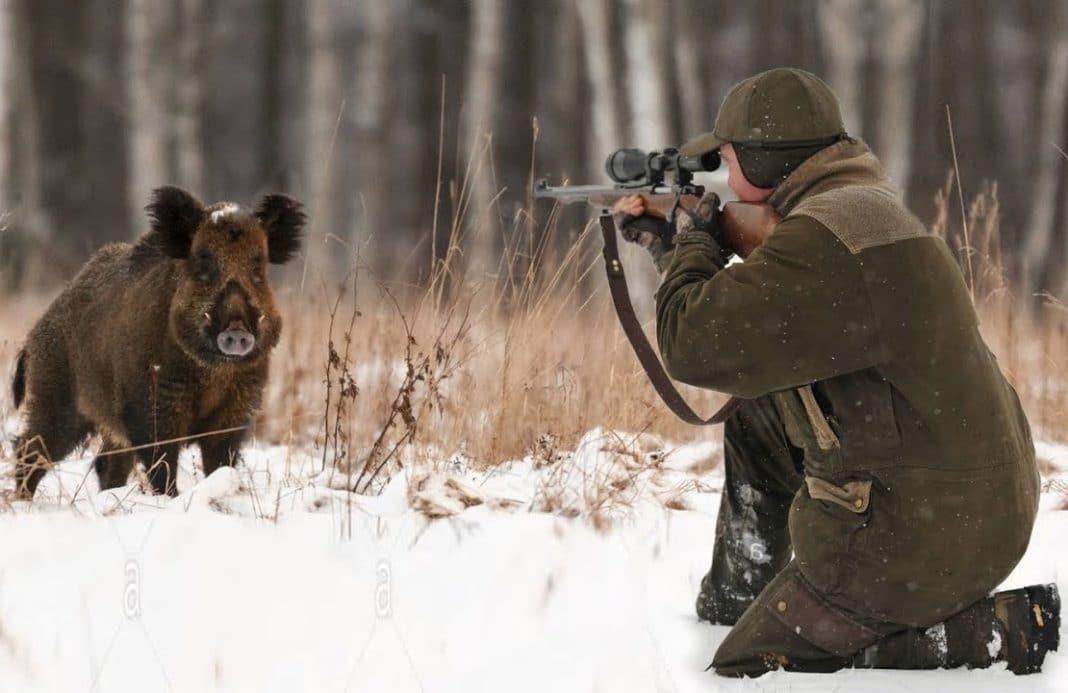 Особенности зимней охоты на кабана