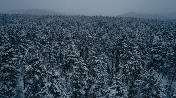 vyzhivanie v tajge zimoj