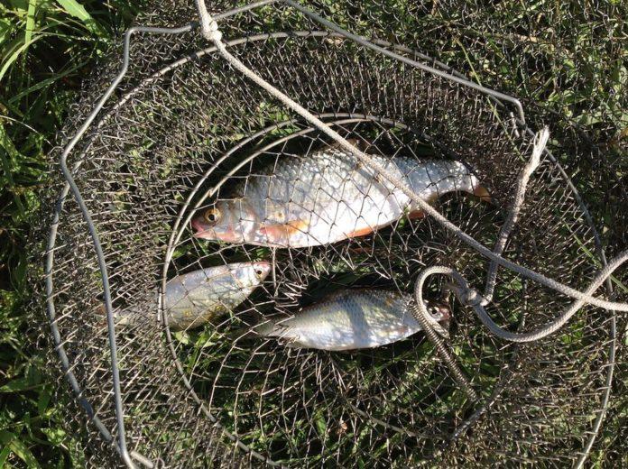 kak sohranit rybu v zharu
